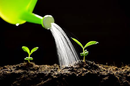 Sprossen aus einer Gießkanne bewässert kann