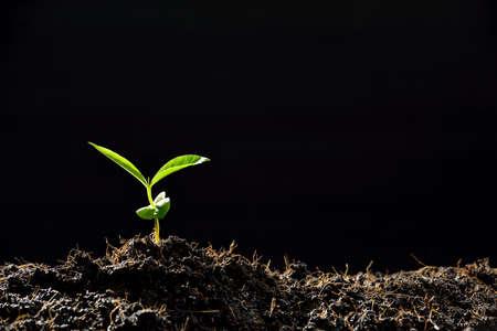 Jeune plante dans la lumière du matin sur fond noir