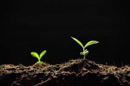 Junge Pflanze im Morgenlicht auf schwarzem Hintergrund