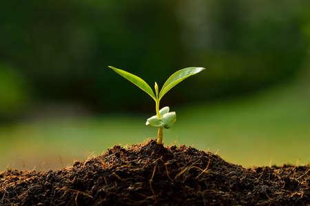 malé: Mladé rostliny v ranním světle