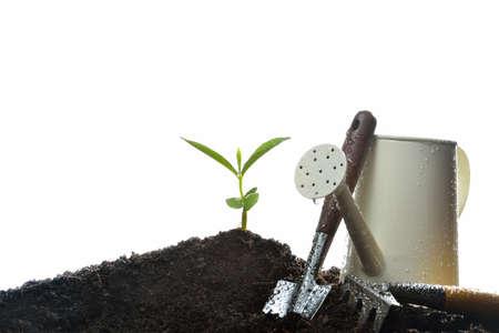 Junge Pflanzen und Gartengeräte isoliert auf weißem Hintergrund Lizenzfreie Bilder