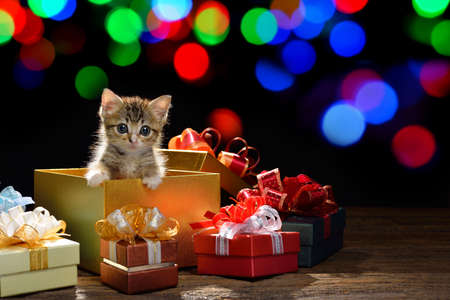 Funny kitten coming out of a gift box  with bokeh background of chrismas lights