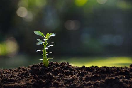 朝の光の中で若い植物します。 写真素材