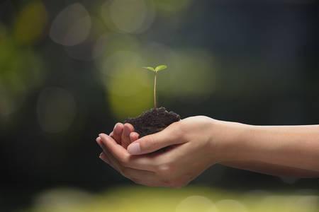 planta con raiz: Manos que sostienen una planta joven verde