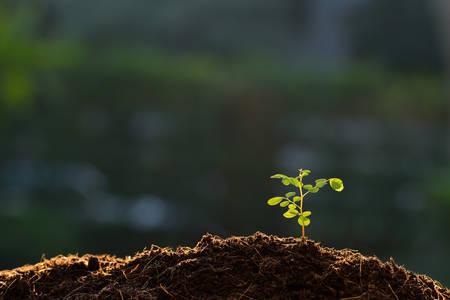 Junge Pflanze im Morgenlicht