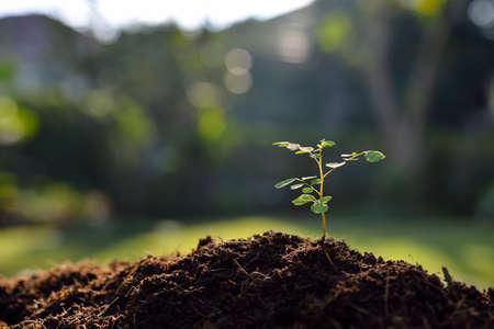 raíz de planta: Jóvenes de plantas en la luz de la mañana
