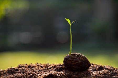 Groene spruit groeit uit zaad Stockfoto