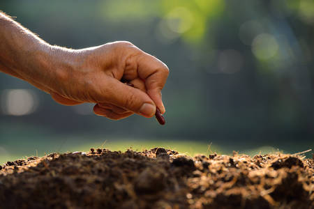 Farmer hand planting a seed in soil photo