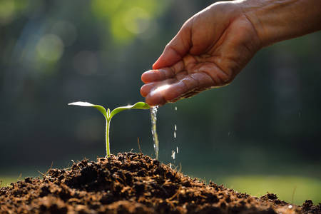 crecimiento planta: Mano del granjero que riega una planta joven Foto de archivo