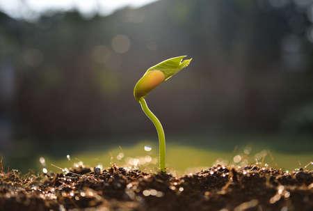 crecimiento planta: J�venes de plantas en la luz de la ma�ana
