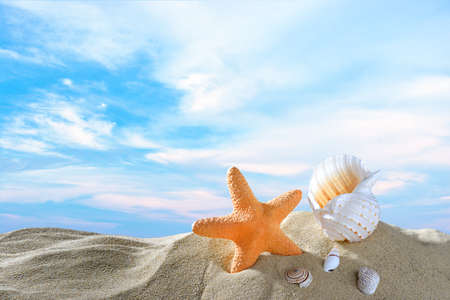 sea star: Starfish and seashells on the sandy beach in summer with blue sea and sky travel icon Stock Photo