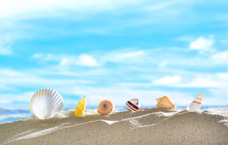 travel icon: Seashells on the sandy beach in summer with blue sea and sky travel icon Stock Photo
