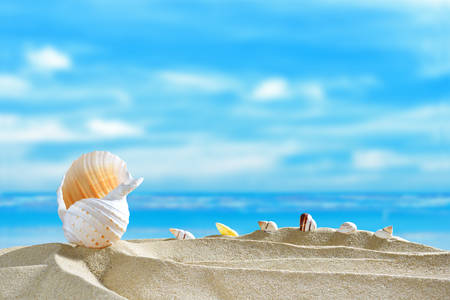 sunshine background: Seashells on the sandy beach in summer with blue sea and sky travel icon Stock Photo