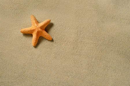 tropical border: Summer beach. Starfish on the sandy beach