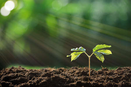 seedling growing: Young plant in the morning light on nature background Stock Photo