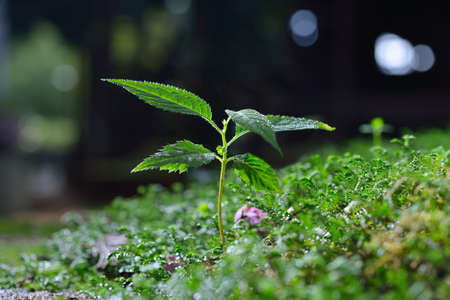 damp: Young plant growing on damp ground covered with moss Stock Photo