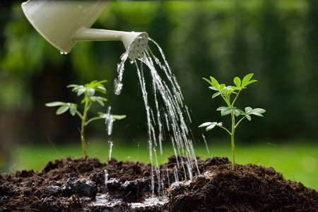 Sprouts watered from a watering can Stockfoto