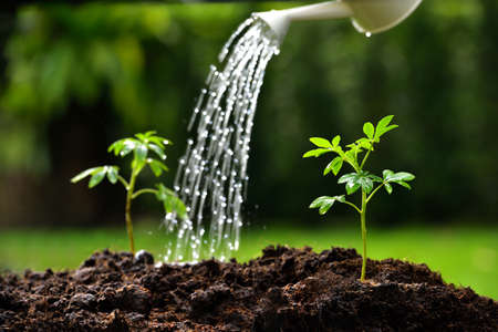 Sprouts watered from a watering can focus on right plant