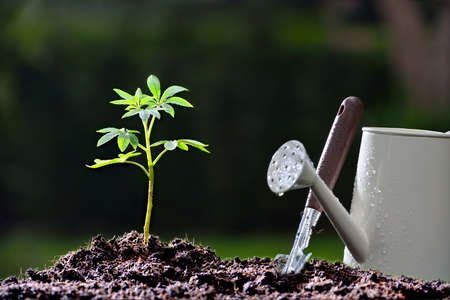 beginning: Young plant and garden equipments in the morning light