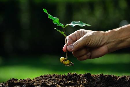 Farmer de hand planten jonge plant met zaad op de grond Stockfoto