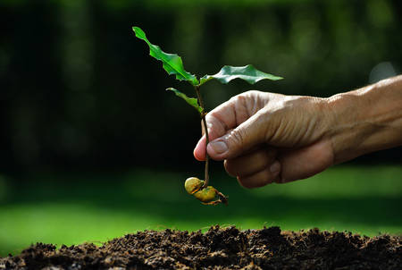 hand holding plant: Farmer hand planting young plant with seed on the soil Stock Photo