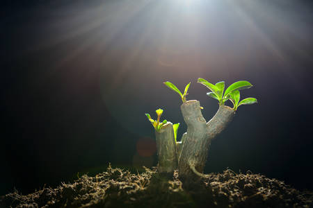 water garden: Sprout growing from tree branch in the morning light