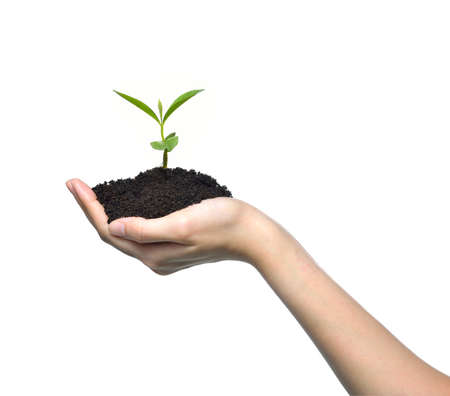 plant hand: Hand holding a green young plant isolated on white background