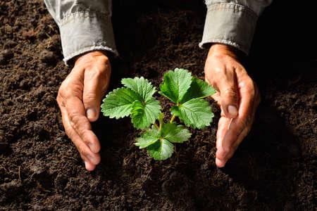 Руки держат и уход молодой зеленое растение