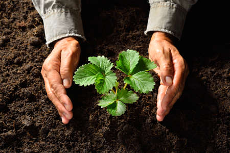 to plant: Hands holding and caring a young green plant
