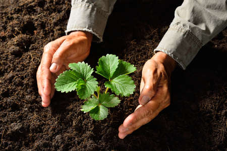 Hands holding and caring a young green plant