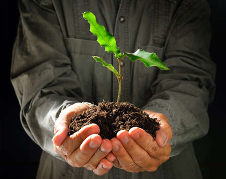 Farmer's hands holding a green young plant