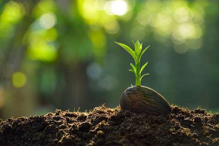 Groene spruit groeien van zaad op natuur achtergrond