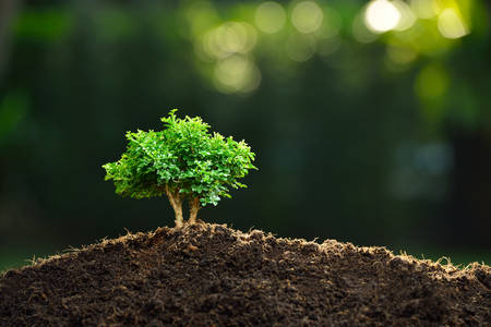 Small plant in the morning light on nature background bonsai tree Foto de archivo