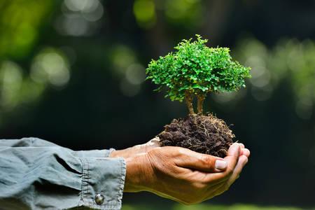koncept: Bondens händer håller ett litet träd på naturen bakgrund