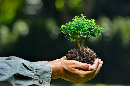 Farmer's hands holding a small tree on nature background