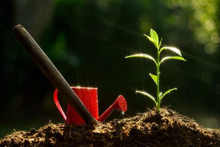 用火花水滴盖的年轻植物和庭院设备