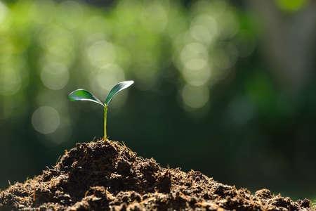 plantando arbol: Plántula en la luz de la mañana en el jardín