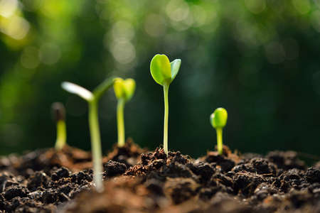 Group of green sprouts growing out from soil Stockfoto