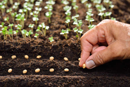 Farmers hand planting seeds in soil