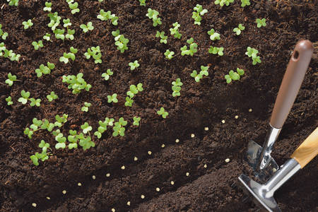 Seeds and young plants planted in soil with gardening tools