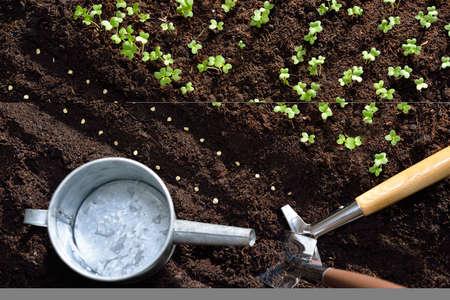 vida natural: Semillas y plantas jóvenes plantados en el suelo con herramientas de jardinería