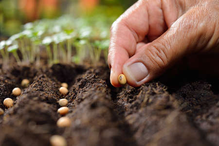 Farmer's hand planting seed in soil