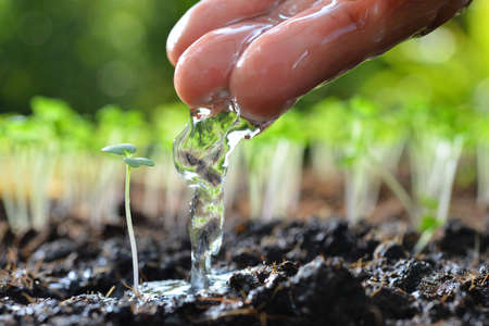 Farmers hand watering a young plant