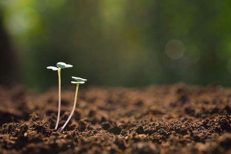 plant nature: Young plant in the morning light on nature background Stock Photo