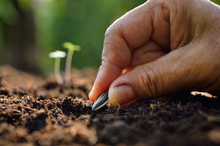 Farmer's hand planting a seed in soil Stockfoto