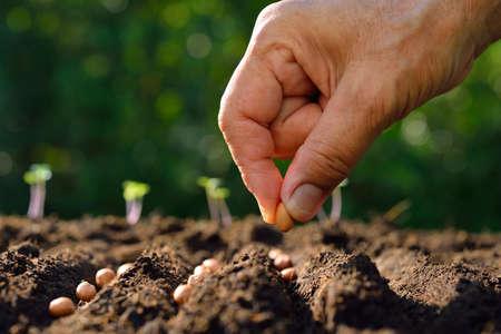 Farmer's hand planten zaad in de grond Stockfoto - 57090023