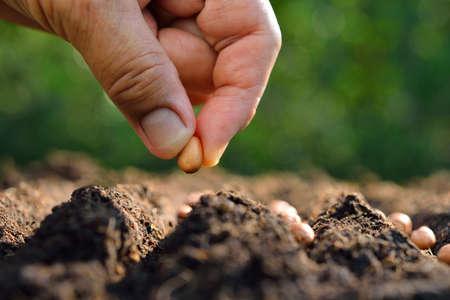 sadzenia nasion ręka rolnika w glebie