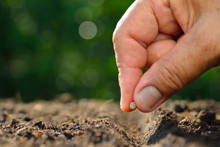 Farmer's hand planting a seed in soil Foto de archivo