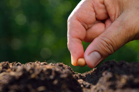 Farmer's hand planting a seed in soil Archivio Fotografico