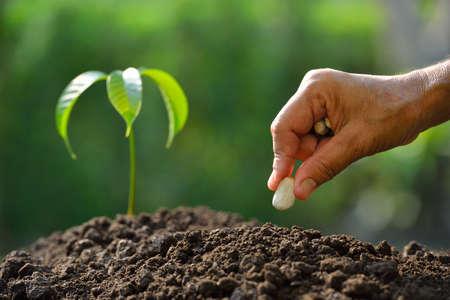 siembra: semillas de la mano de siembra de los agricultores en el suelo
